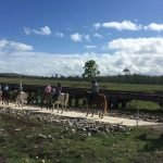 horse trail riders on the Brisbane Valley Rail Trail